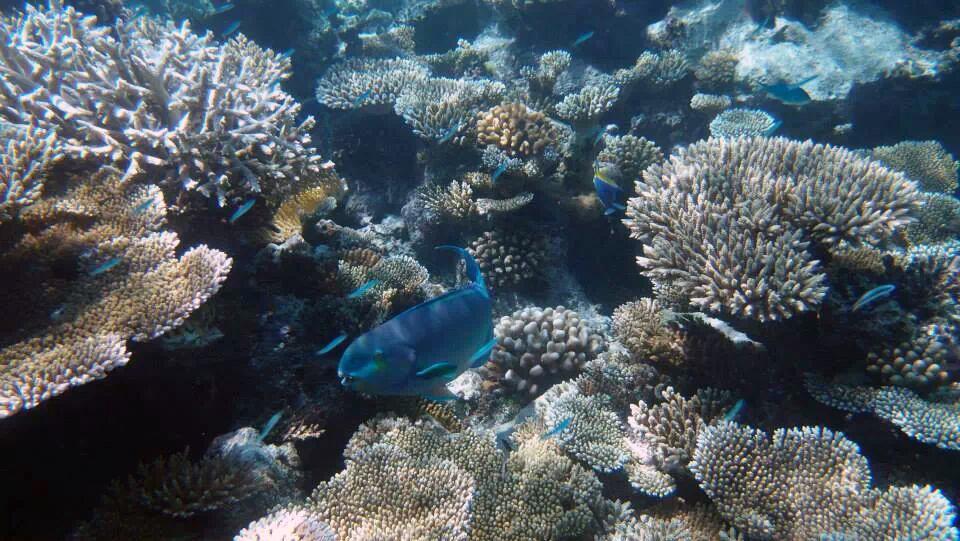 壁纸 海底 海底世界 海洋馆 水族馆 桌面 960_541